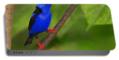 Red-legged Honeycreeper Portable Battery Charger