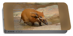 Red River Hog  Portable Battery Charger