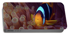 Red Sea Clownfish, Eilat, Israel 9 Portable Battery Charger