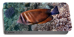 Red Sea Sailfin Tang 3 Portable Battery Charger