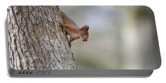 Red Squirrel Climbing Down A Tree Portable Battery Charger