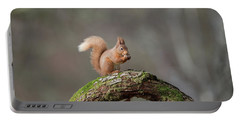 Red Squirrel Eating A Hazelnut Portable Battery Charger