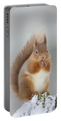 Red Squirrel Nibbling A Hazelnut In The Snow Portable Battery Charger