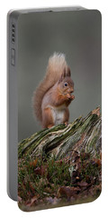 Red Squirrel Nibbling A Nut Portable Battery Charger