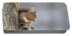 Red Squirrel On Tree Fungus Portable Battery Charger