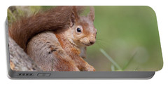 Red Squirrel - Scottish Highlands  #17 Portable Battery Charger