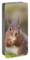 Red Squirrel - Scottish Highlands #18 Portable Battery Charger