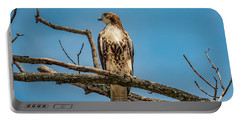 Red Tail Hawk Perched Portable Battery Charger