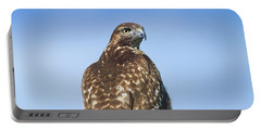 Red-tailed Hawk Perched Looking Back Over Shoulder Portable Battery Charger