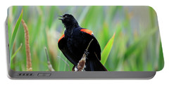 Red-winged Blackbird At Miner's Marsh, Nova Scotia Portable Battery Charger
