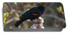 Portable Battery Charger featuring the photograph Red-winged Blackbird On Cattail Reed by Sharon Talson
