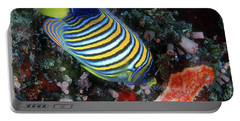 Regal Angelfish, Great Barrier Reef Portable Battery Charger