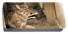 Resting Coyote Portable Battery Charger
