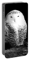 Resting Snowy Owl Portable Battery Charger by Darcy Michaelchuk