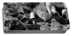 Portable Battery Charger featuring the photograph Ring-billed Gulls 2016-1 by Thomas Young