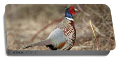 Ring-necked Pheasant Stony Brook New York Portable Battery Charger