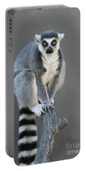 Ring-tailed Lemur #6 V2 Portable Battery Charger
