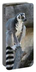 Ring-tailed Lemur #7 Portable Battery Charger