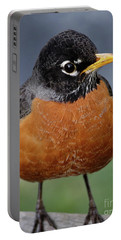 Portable Battery Charger featuring the photograph Robin II by Douglas Stucky