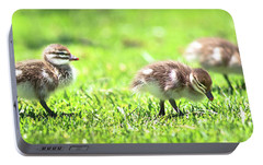 Portable Battery Charger featuring the photograph Rogue Duckling, Yanchep National Park by Dave Catley