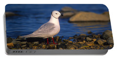 Ross's Gull Portable Battery Charger