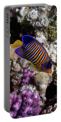 Royal Angelfish Macro 3 Portable Battery Charger
