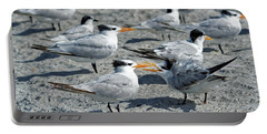Royal Terns Portable Battery Charger by Paul Mashburn