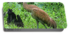 Sandhill Crane At Sandy Ridge Reservation Portable Battery Charger