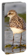 Sandpiper Portrait Portable Battery Charger by Robert Frederick