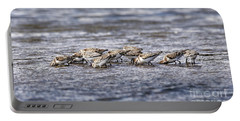 Portable Battery Charger featuring the photograph Sandpipers Heads Down by Sue Harper