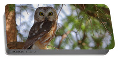 Saw-whet Owl Portable Battery Charger