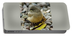 Say's Phoebe Fledgling Portable Battery Charger