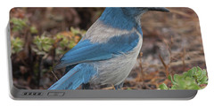 Scrub Jay Framed In Green Portable Battery Charger by Paul Rebmann