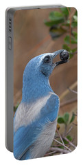 Scrub Jay With Acorn Portable Battery Charger