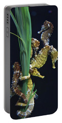 Portable Battery Charger featuring the photograph Sea Horse by Joan Reese