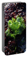 Portable Battery Charger featuring the photograph Sea Lettuce by Adria Trail