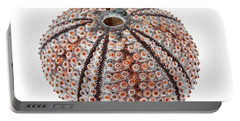 Portable Battery Charger featuring the photograph Sea Urchin by Elena Elisseeva