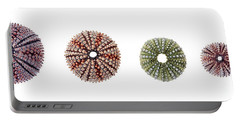 Portable Battery Charger featuring the photograph Sea Urchins Of Various Sizes by Elena Elisseeva