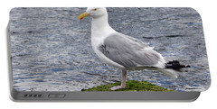 Portable Battery Charger featuring the photograph Seagull Posing by Glenn Gordon
