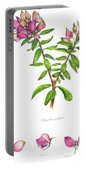 Portable Battery Charger featuring the painting Septemberbossie  Polygala Myrtifolia by Heidi Kriel
