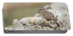 Short-eared Owl In Cotswolds Portable Battery Charger