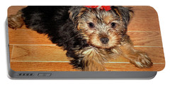 Portable Battery Charger featuring the photograph Silky Terrier Puppy by Sue Melvin