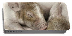 Portable Battery Charger featuring the photograph Sleeping Piglet by Brad Allen Fine Art