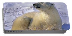 Sleepy Polar Bear Portable Battery Charger