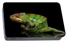 Sneaking Panther Chameleon, Reptile With Colorful Body On Black Mirror, Isolated Background Portable Battery Charger by Sergey Taran