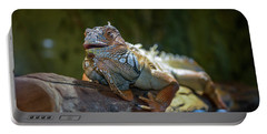 Snoozing Iguana Portable Battery Charger by Martina Thompson