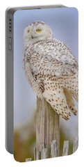 Snowy Owl In Maryland Portable Battery Charger