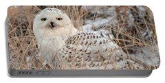 Snowy Owl Portable Battery Charger by Nancy Landry