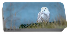 Snowy Owl On A Park Bench Portable Battery Charger