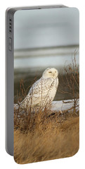 Snowy Owl On Cape Cod Portable Battery Charger
